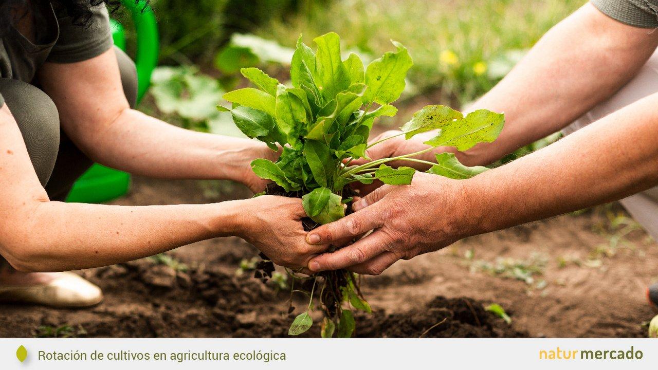 ¿Qué es la agricultura ecológica? - Ventajas y desventajas