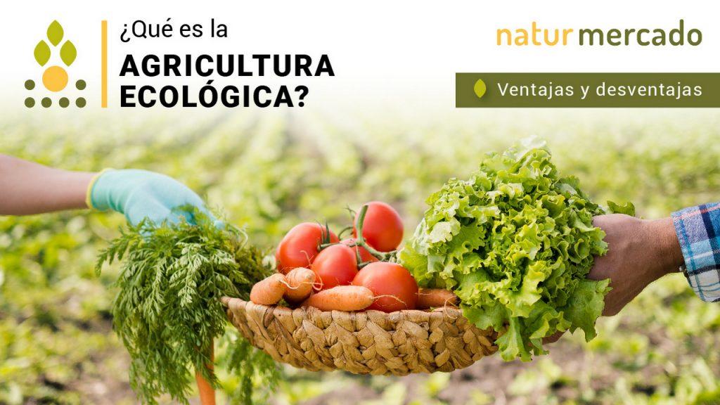 ¿Qué es la agricultura ecológica? – Ventajas y desventajas