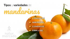 Tipos y variedades de mandarinas